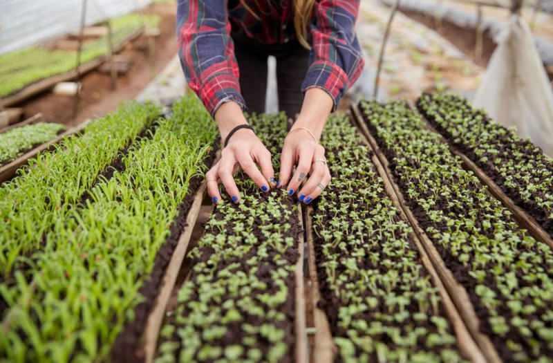 Tohum filizlendirmesi nasıl yapılır