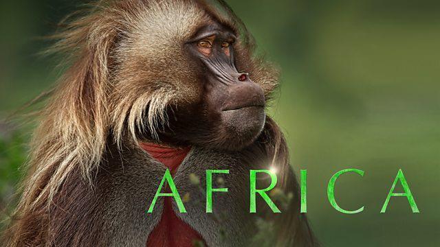Afrika / Africa (2013)