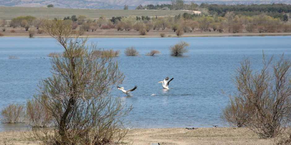 """100'den fazla türe ev sahipliği yapan """"Kuş Cenneti"""" Suluova Yedikır"""