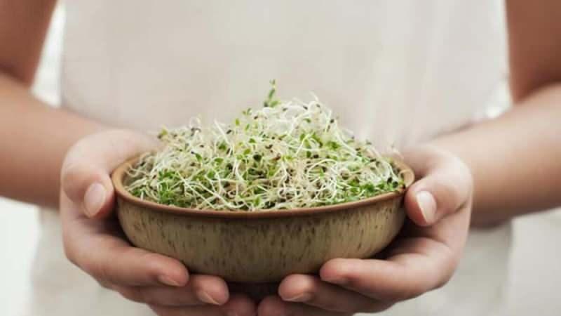 mikro filiz genellikle marul, salatalık, nohut ve lahana gibi besinlerden elde edilir
