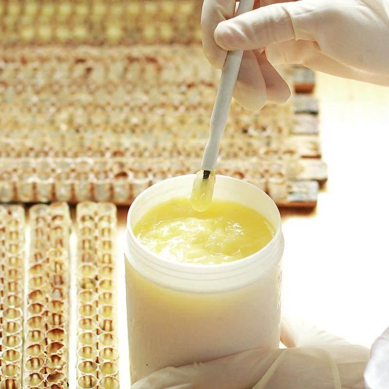 arı sütü oldukça zor elde edilir.