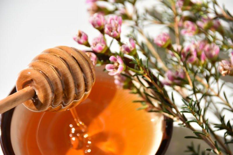 manuka balı manuka çiçeğinden elde edilir