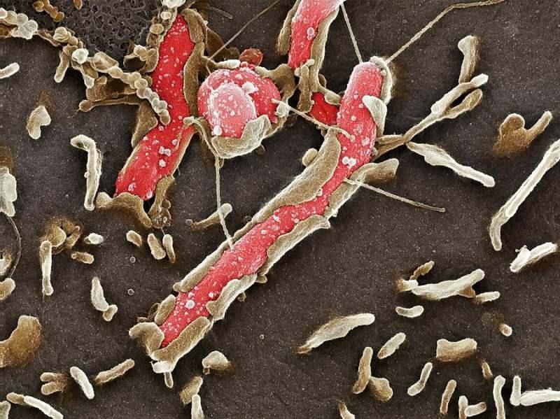 Mide Mikrobu Nedir?