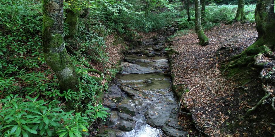 Sonbaharın en güzel adresleri: Zonguldak kent ormanı