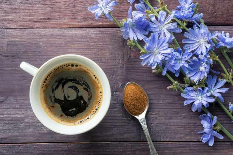 Hindiba kahvesi nedir, hindiba kahvesi nasıl yapılır?