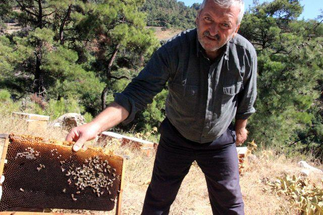 Arılar, Arapça yazılar yazıp kovanlarını terk ediyor! 'Kıyamet alameti...' - GÜNCEL Haberleri