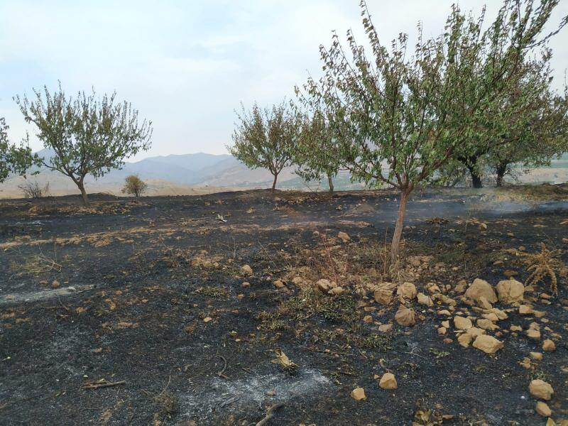 Elazığ'daki yangında 500 dönüm alan zarar gördü, binlerce arı öldü