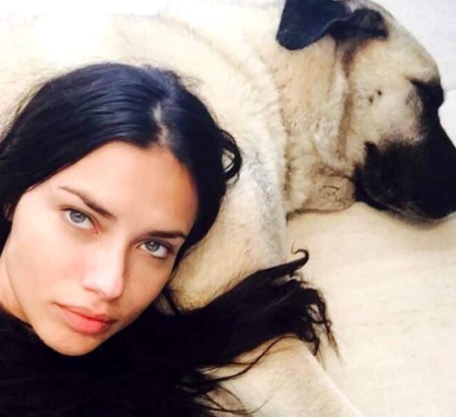 Adriana Lima kangal köpeği