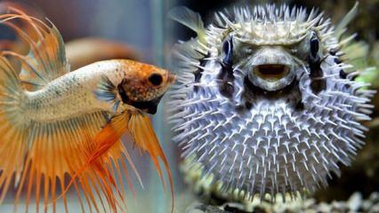 Rüyada balık görmek neye işaret | Rüyada balık iyi mi kötü mü yorunlanır?