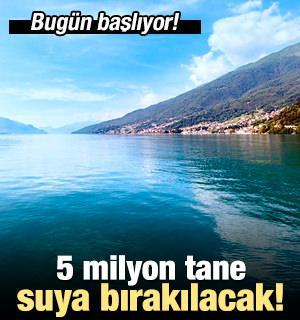 Bugün başlıyor! 5 milyon tane suya bırakılacak