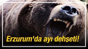 Erzurum'da ayı dehşeti!
