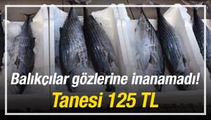 Balıkçılar gözlerine inanamadı! Tanesi 125 TL