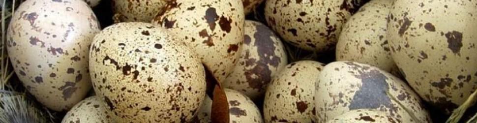 2 tane tavuk yumurtasından daha faydalı!