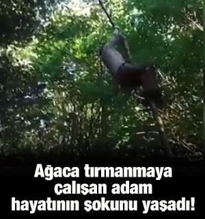 Ağaca tırmanmaya çalışan adam hayatının şokunu yaşadı!