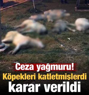 Köpekleri öldüren 3 kişi hakkında karar verildi! Ceza yağdı